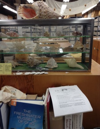 view of the mollusc collection