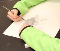 drawing of a lesser hedgehog tenrec