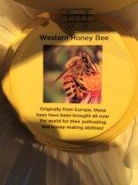 Western honey bee display inside a flower