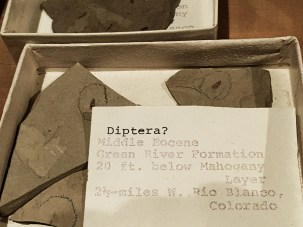 Fossil specimens and associated label data