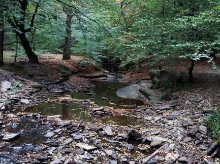Roddlesworth Wood