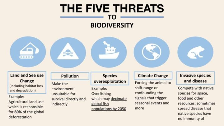 Biodiversity Loss in Numbers, the 2020 WWF Report | Earth.Org - Past |  Present | Future
