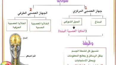 Photo of ملخص الجهاز العصبي أحياء صف تاسع متقدم فصل ثاني