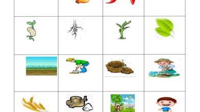 Photo of صف ثاني اللغة الانجليزية تدريب مفردات الفصل الثاني