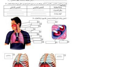 Photo of ورقة عمل الجهاز التنفسي مع الحل علوم صف ثامن فصل ثاني