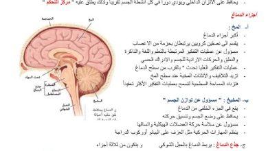 Photo of صف ثاني عشر عام فصل أول تلخيص أحياء درس تنظيم الجهاز العصبي