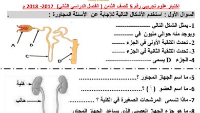 Photo of أوراق عمل الجهاز الاخراحي مع الإجابات علوم صف ثامن فصل ثاني