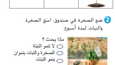 Photo of صف ثاني فصل ثاني علوم مراجعة الوحدة الخامسة الكائنات الحية والجمادات