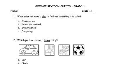 Photo of أوراق عمل مراجعة علوم منهج إنجليزي صف أول فصل أول