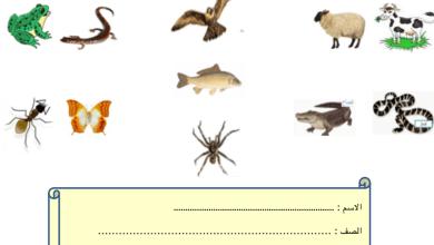 Photo of الوحدة الرابعة كل ما يتعلق بالحيوانات علوم صف أول فصل أول