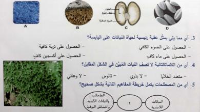 Photo of امتحان نهاية الفصل الأول 2018 – 2019 أحياء صف عاشر عام مع دليل التصحيح