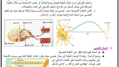 Photo of تلخيص الدرس الأول والثاني الجهاز العصبي أحياء صف عاشر عام فصل ثالث