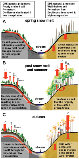 Water pathways and primary mechanisms affecting the pathways in coniferous dominated ecosystems (left side of panels) and deciduous dominated ecosystems (right side of panels).