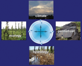 A holistic approach must be taken in order to understand the ecohydrology of the Alaskan boreal forest.