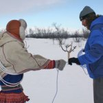 Cost (right) learns to lasso from a Sámi reindeer herder in Sámiland, Kautokeino, Norway. (Photo by A. Lovecraft)