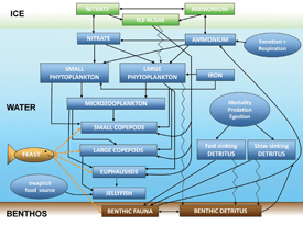 Schematic illustration of the structure and direction of material flow in the BEST-NPZ model developed for the Bering Sea. The model couples a core pelagic model with an ice biology model and a benthic (sea floor) sub-model.