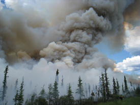A smoke column develops during an experimental burn outside of Fairbanks, Alaska. (Photo: D. Haggstrom, courtesy of SNAP and ACCAP)
