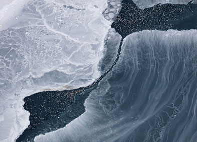sea ice and eiders viewed from above