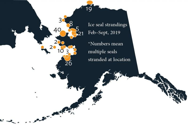 map of ice seal strandings