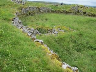 Hip-high grasses in the Burren