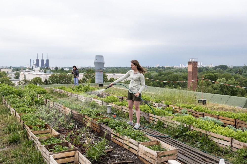 urban-farming-masa-pandemi