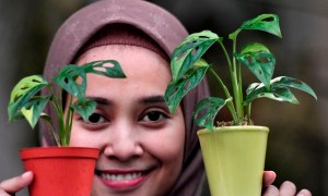 bisnis tanaman hias