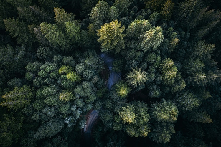 drone-forest-photo