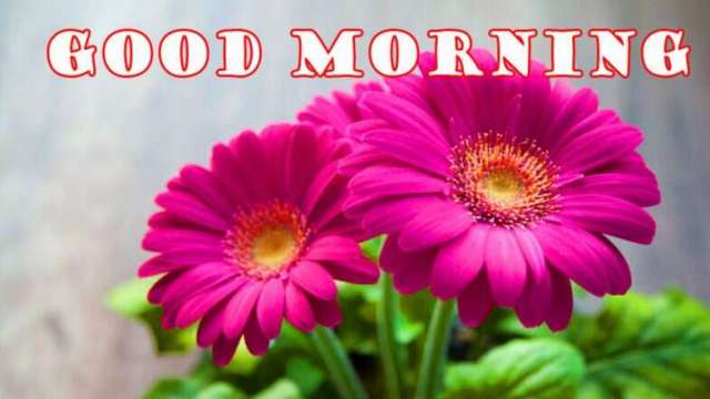 good morning images 2020 hd download