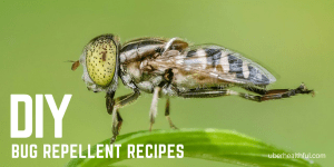3 Natural Home Bug Repellent Recipes that Work