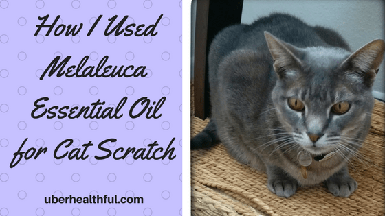 essential oils to prevent infection from cat scratch