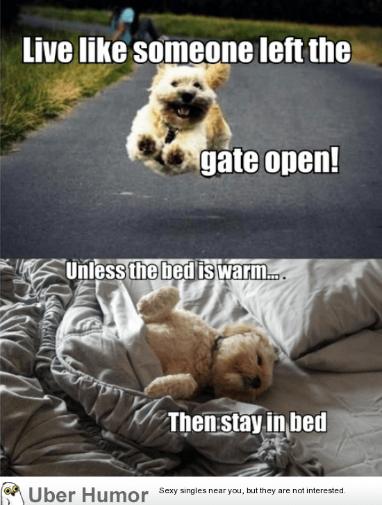 Beaufiful Funny Dog Quotes Photos >> 30 Cute Funny Dog
