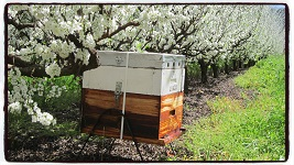 South Africa Pollination Services