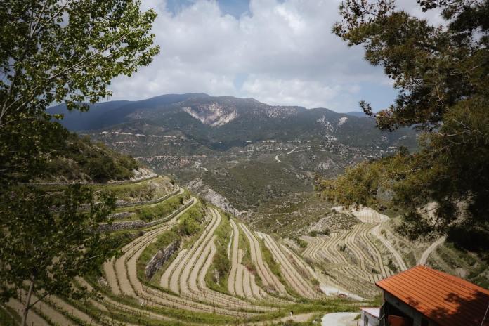 View vine yards