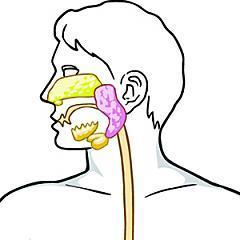 鼻咽癌 | 元氣網