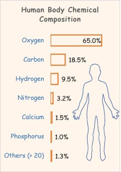 Human Body Chemical Composition