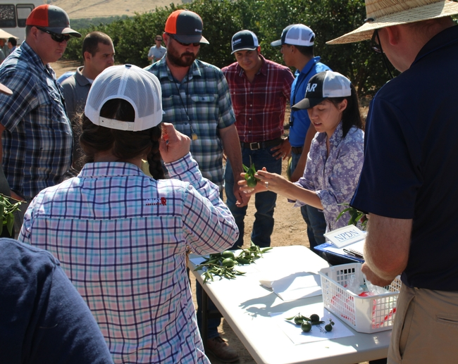 Lindcove Research and Extension Center News  Agriculture