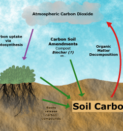 achieving carbon sequestration by building soil organic matter requires that carbon input rates green arrows [ 1100 x 1000 Pixel ]