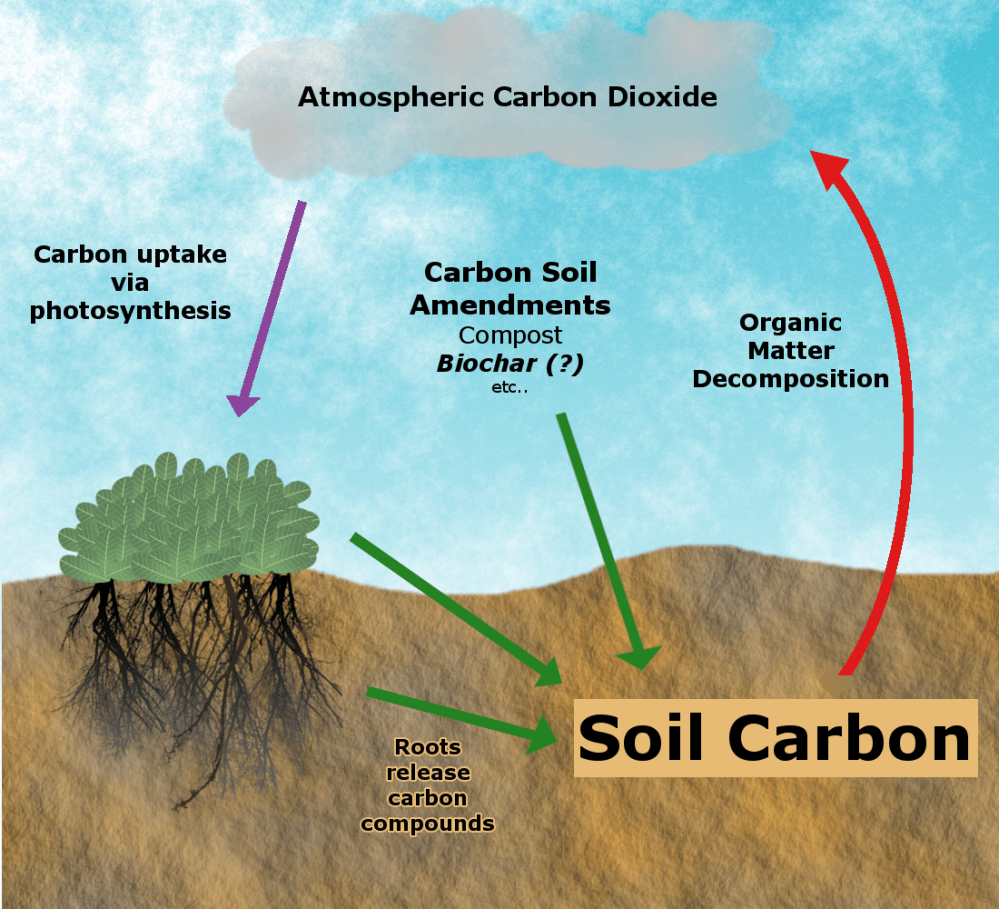 medium resolution of achieving carbon sequestration by building soil organic matter requires that carbon input rates green arrows