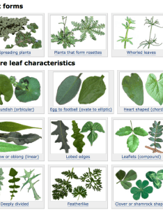 Figure plant characteristics page also user friendly weed identification tool pests in the urban rh ucanr