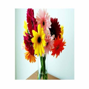 12 Mix Gerberas Hand Bunch