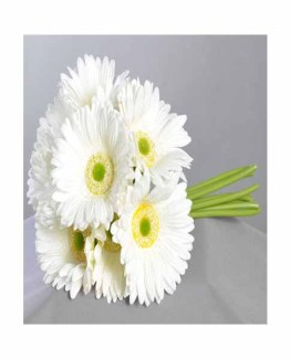 White Gerberas Hand Bunch