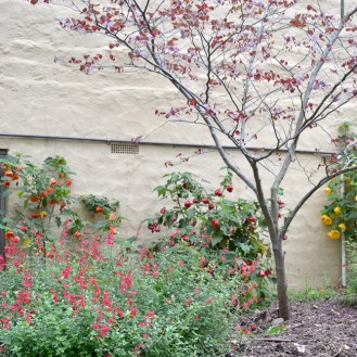 Forest Pansy Tree with Salvia and Chinese Lanterns