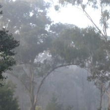 Misty Arch over Gum Trees