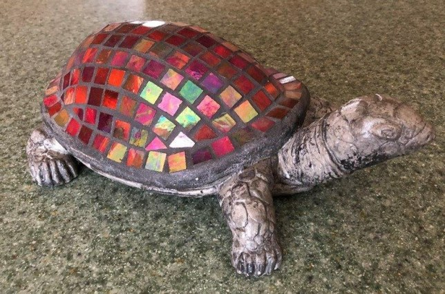 a very special turtle