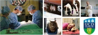 UCD Veterinary Hospital