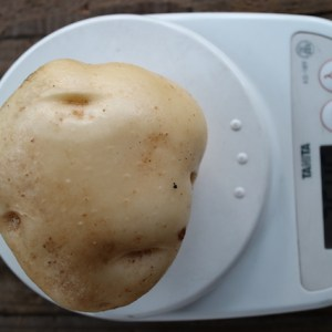 potato- harvest-2017