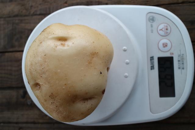 potato-2017