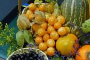especie fruticola andina la uchuva