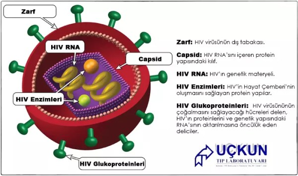 hiv-virus-uckun