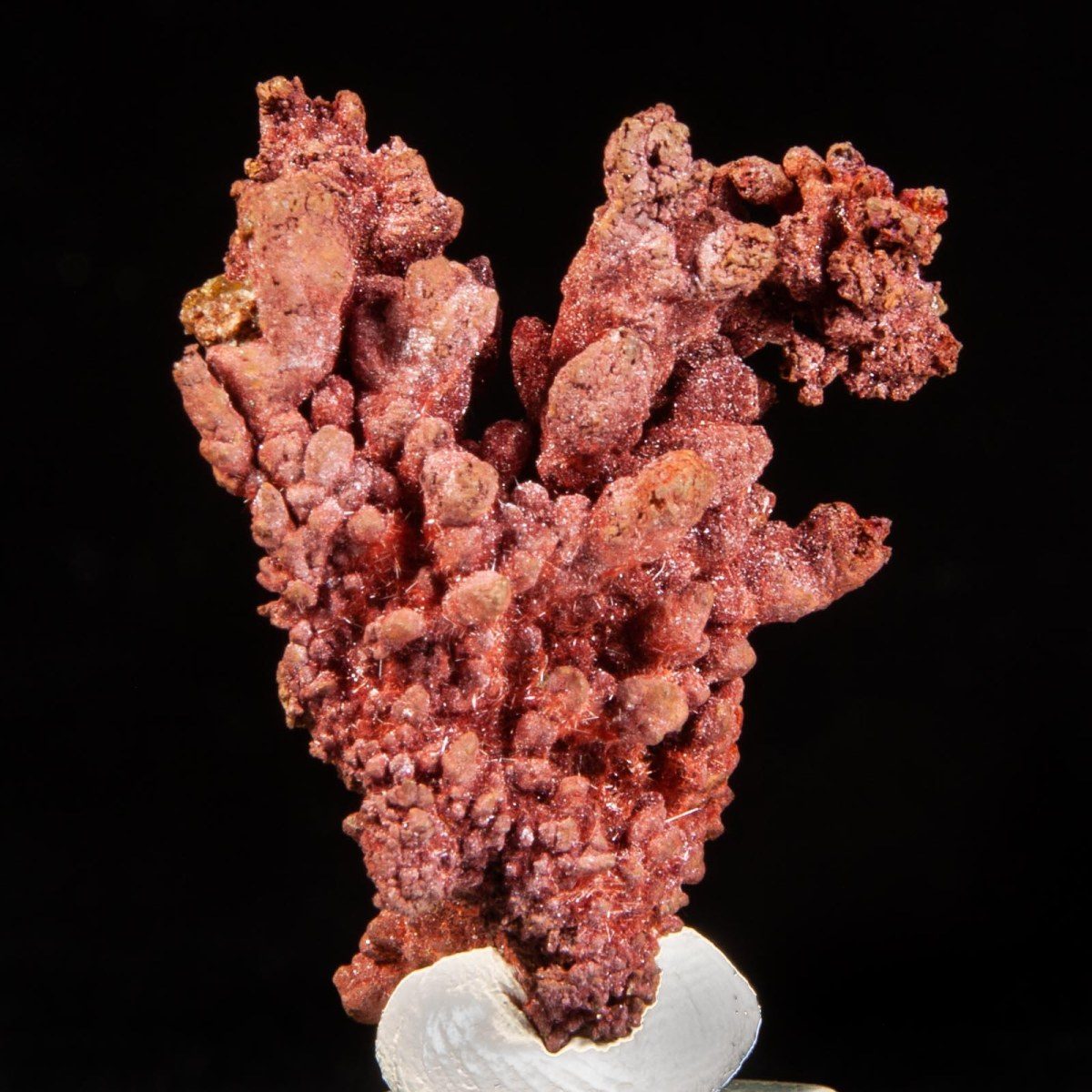 Copper with Chalcotrichite
